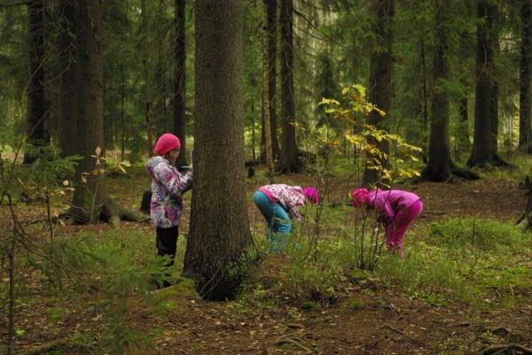 Tytöt tutkivat puita: Koululaisretkillä tehdään pieniä tutkimuksia. Kuvassa kolmasluokkalaiset selvittävät mitä lajeja elää tietyn puun ympärillä ja puussa.